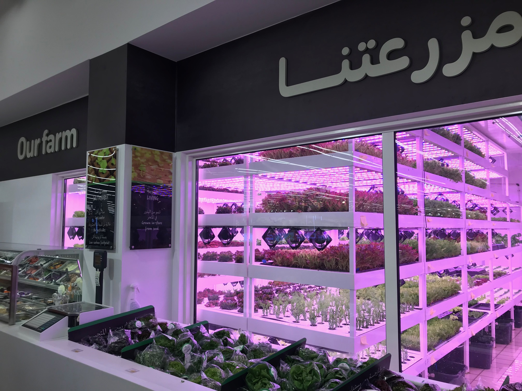 AGRITECH – How UAE wants to increase food production